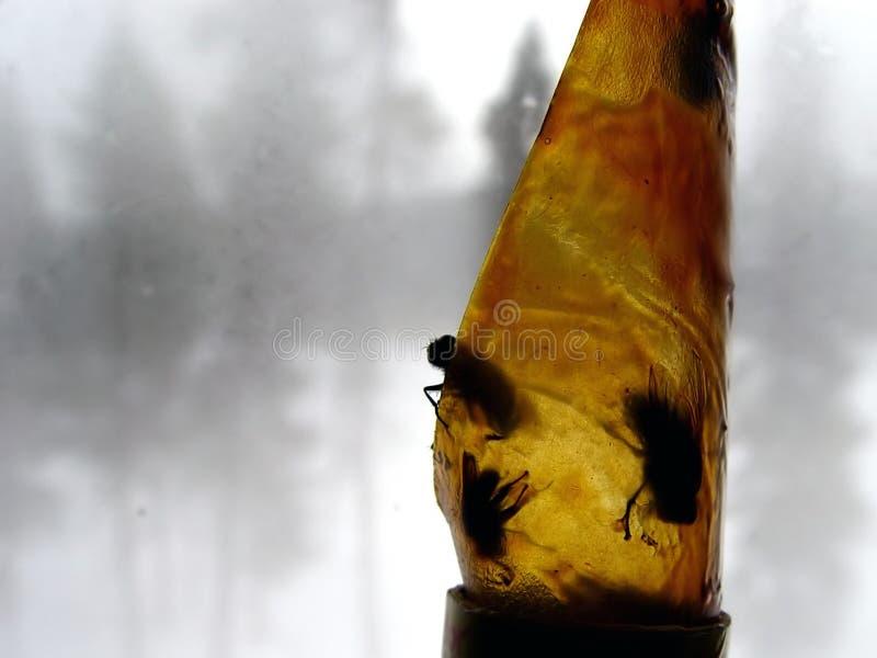 Presa Della Mosca Fotografia Stock Libera da Diritti