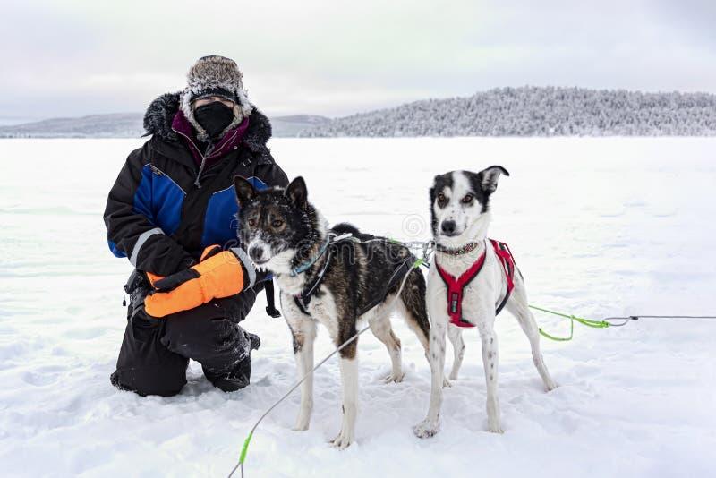 Presagie acariciar perros fornidos después de paseo turístico del trineo fotografía de archivo libre de regalías