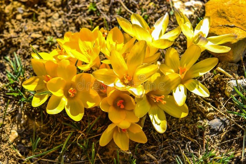 Presagio dei fiori della molla fotografia stock libera da diritti