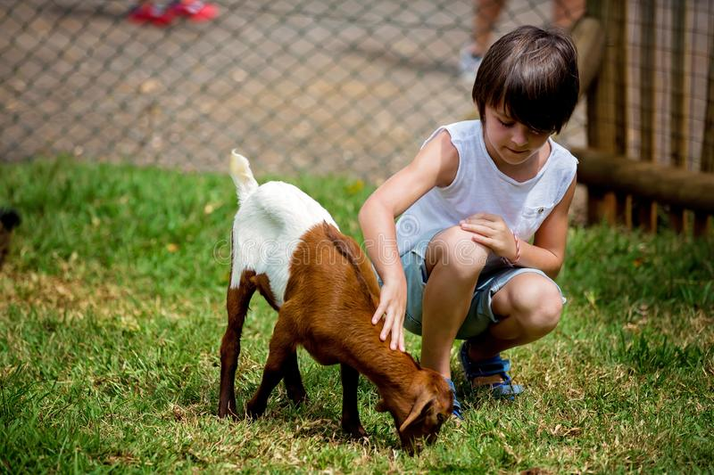 Preschool boy, petting little goat in the kids farm. Cute kind child feeding animals stock photo