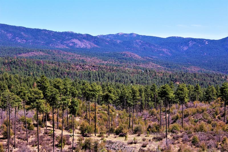 Prescott National Forest, Arizona, Etats-Unis photo stock