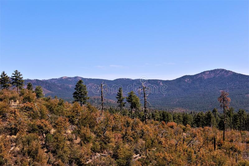 Prescott National Forest, Arizona, Etats-Unis image stock