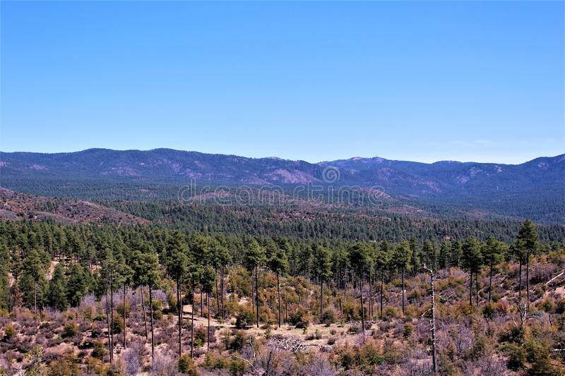 Prescott National Forest, Arizona, Stati Uniti fotografia stock