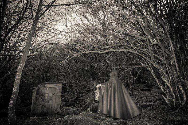 Presença escura nas madeiras foto de stock royalty free