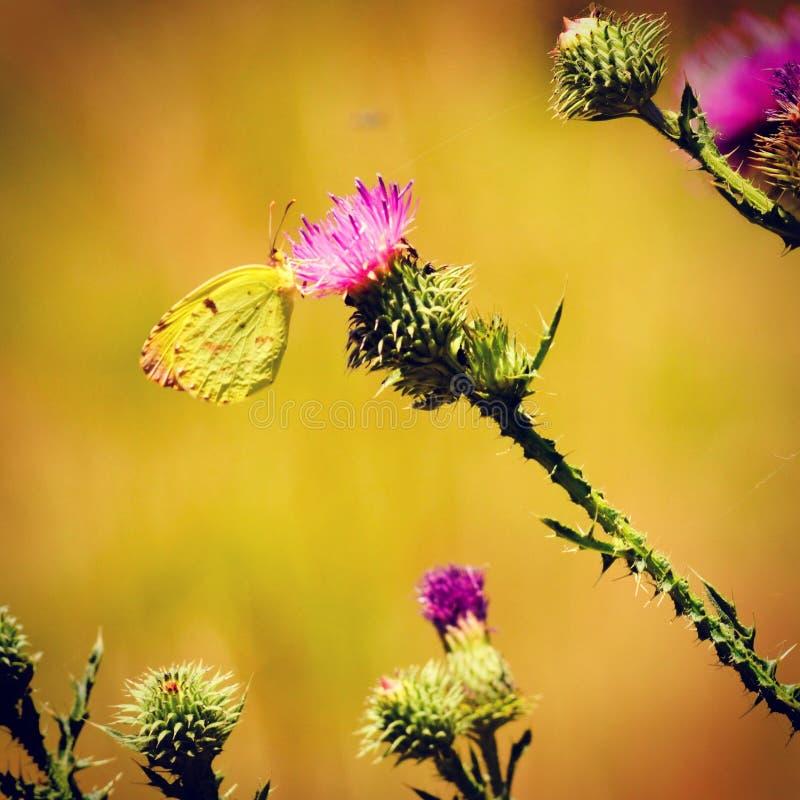Presentación de la mariposa fotografía de archivo