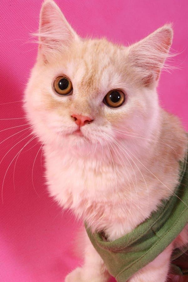Presentación del gato imágenes de archivo libres de regalías