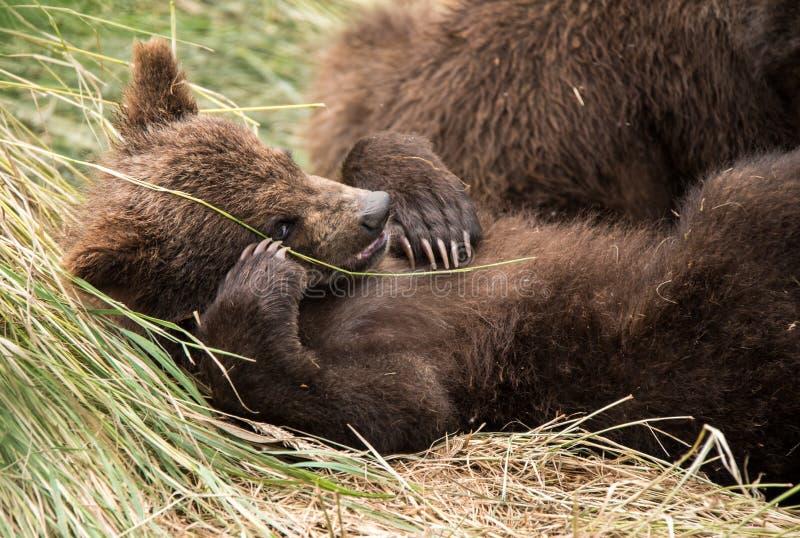 Presentación linda del oso del bebé foto de archivo libre de regalías