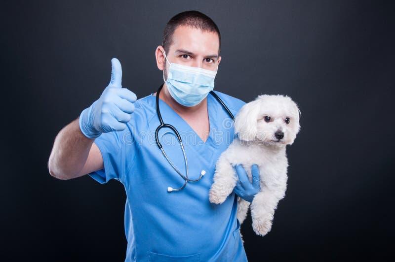 Presentación veterinaria con el perro blanco del bichon que muestra como foto de archivo libre de regalías