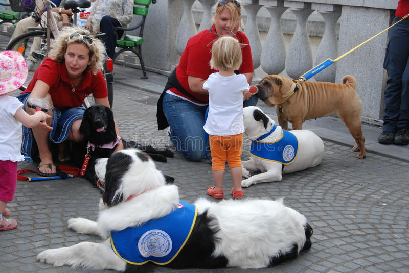 Presentation of therapy dogs stock photo