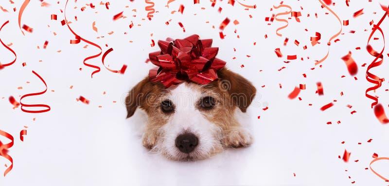 Presente bonito do cão da bandeira para o Natal, o aniversário, o dia de são valentim ou o aniversário, vestindo uma fita vermelh imagem de stock