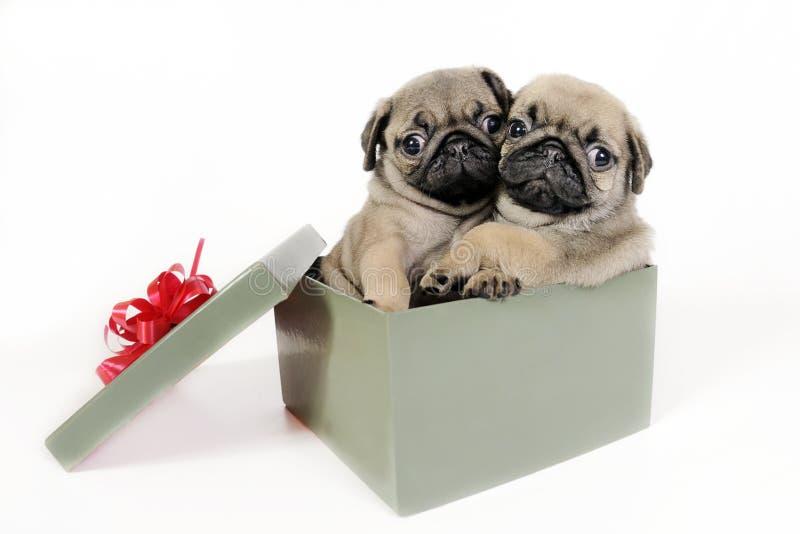 Presente dei cuccioli. fotografia stock