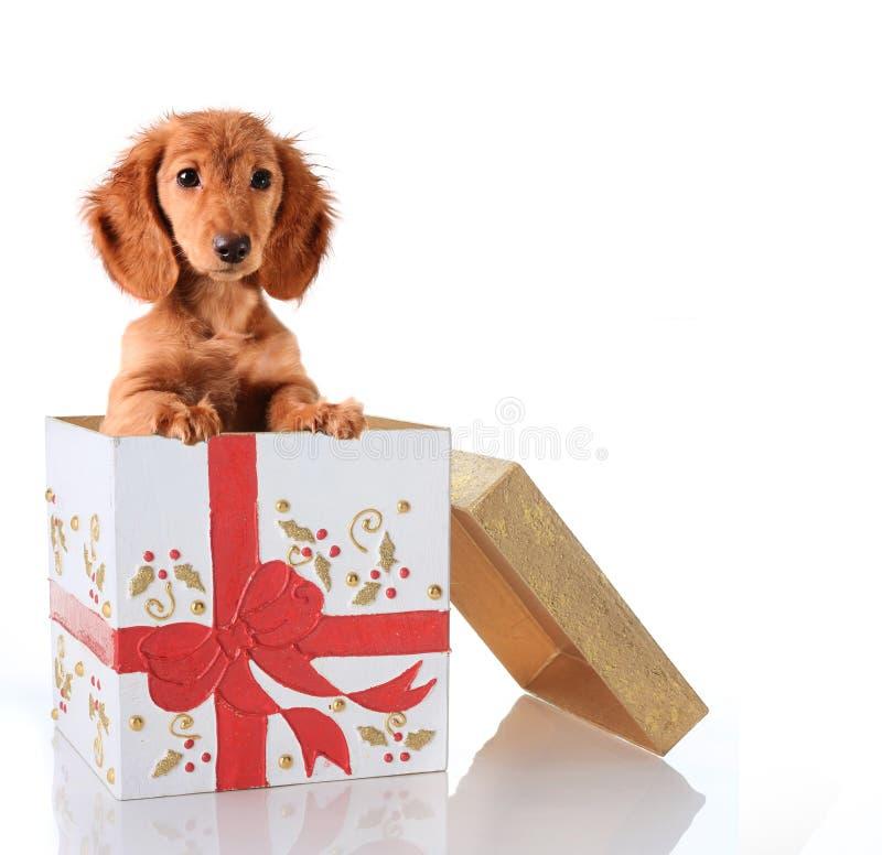 Presente del cucciolo di natale fotografia stock
