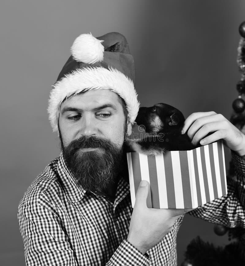 Presente do ano novo Homem em jogos do chapéu do xmas com cachorrinho fotos de stock royalty free