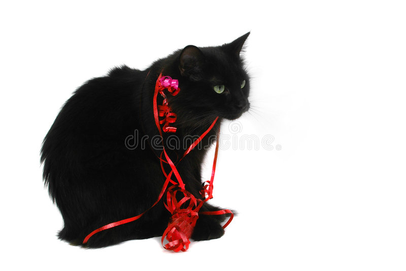 Presente do gato preto do Natal foto de stock royalty free