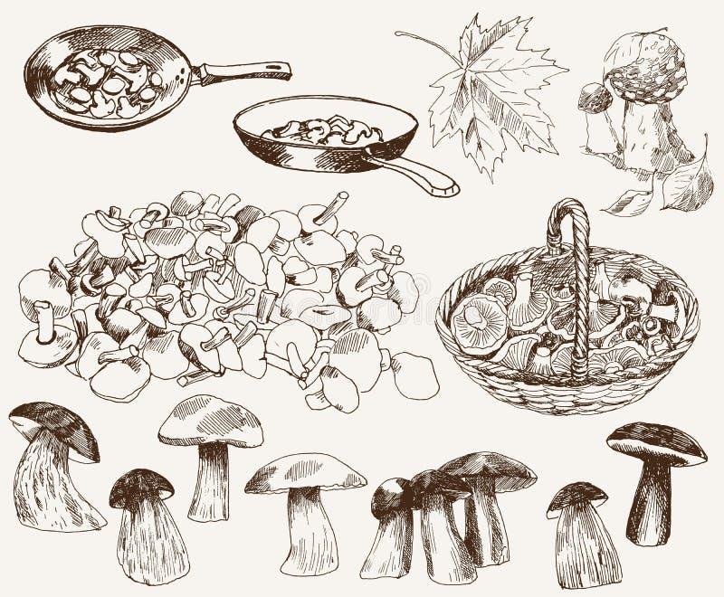 Presentes da natureza: cogumelos ilustração royalty free
