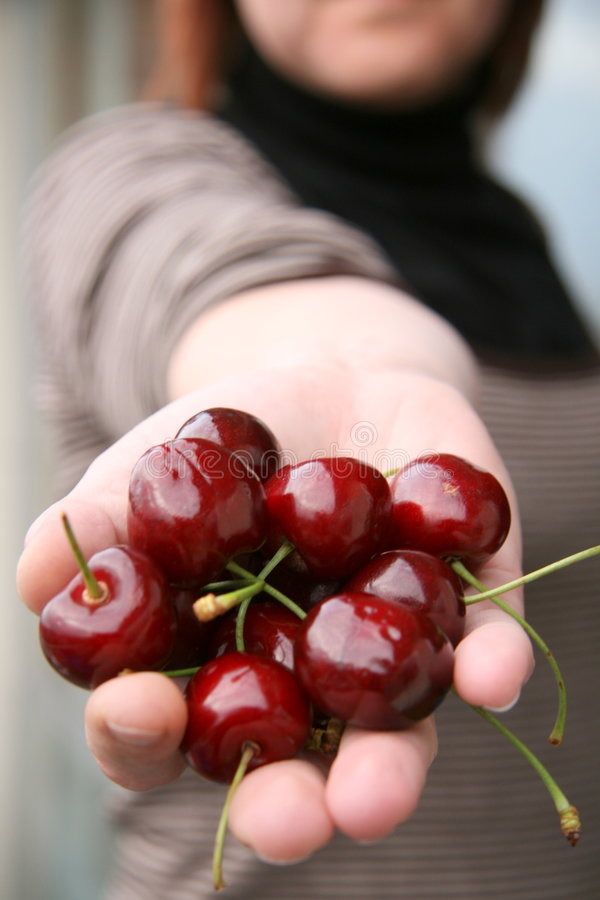Presenting cherries royalty free stock photo