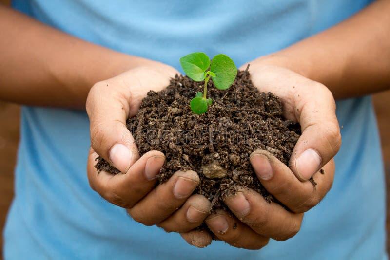 Preservar tratamentos naturais das árvores seja feita com duas mãos imagem de stock royalty free