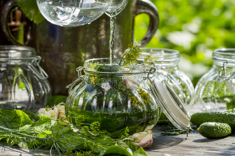 Preserving fresh cucumbers in a jar in the countryside royalty free stock photo