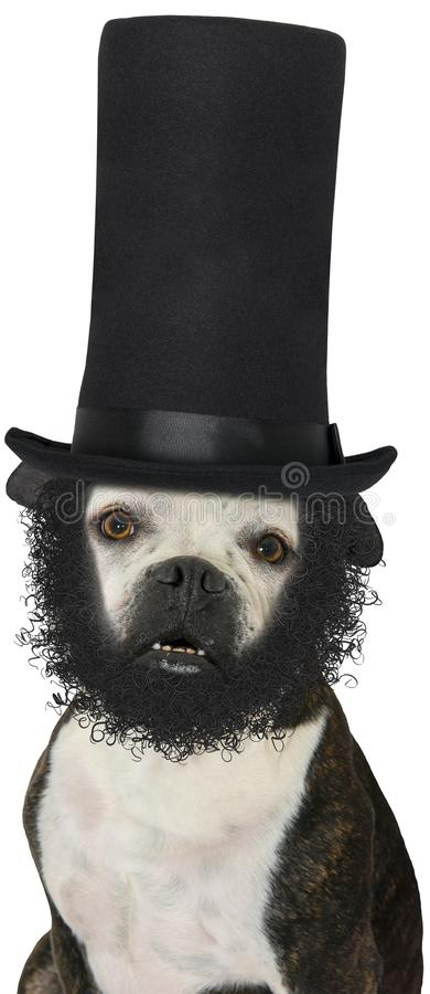 Presidente Abraham Lincoln Dog Isolated foto de stock royalty free