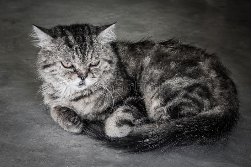 Presione el gato de la cara foto de archivo