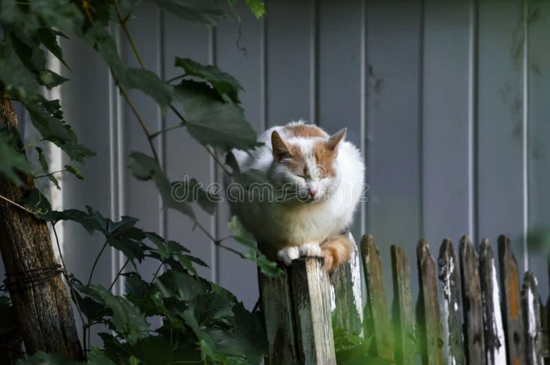 Presque totalement le chat blanc se repose sur le portrait de barrière photo libre de droits