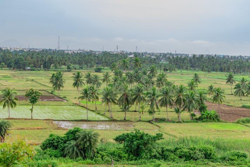 Pressão impressionante do jardim da árvore de coco com campo de cultivo da almofada com opinião de céu azul da montanha imagem de stock royalty free
