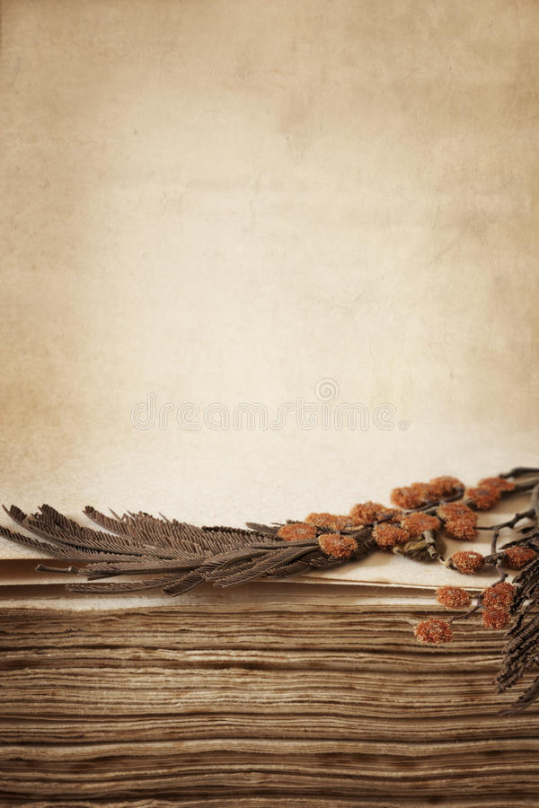 Pressed Flowers in Antique Book