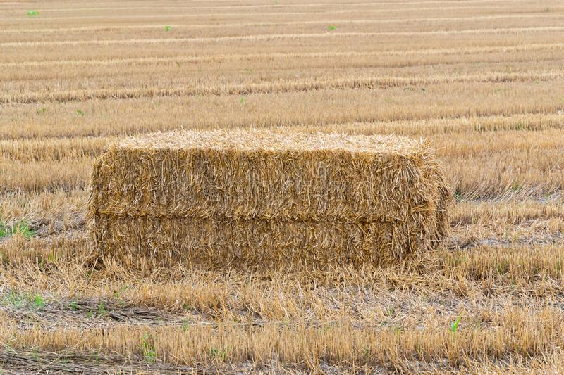 Pressed hay straw briquette left of harvest lying on a field. Agriculture, autumn, bale, countryside, crop, farm, farmland, summer, yellow, background, natural royalty free stock images