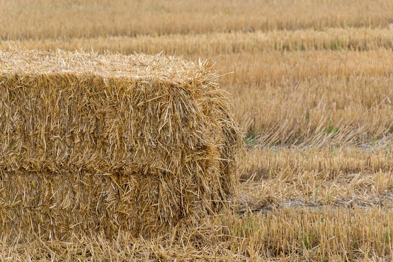 Pressed hay straw briquette left of harvest lying on a field. Agriculture, autumn, bale, countryside, crop, farm, farmland, summer, yellow, background, natural stock images