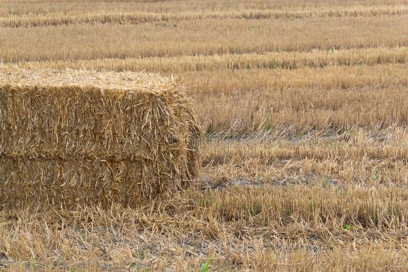 Pressed hay straw briquette left of harvest lying on a field. Agriculture, autumn, bale, countryside, crop, farm, farmland, summer, yellow, background, natural royalty free stock photography
