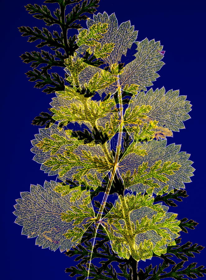Pressed plants royalty free stock photography
