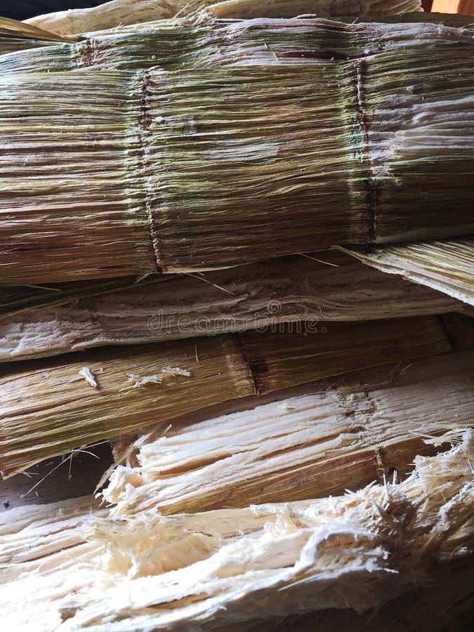 Pressed Sugar Cane, leftover bagasse stock image