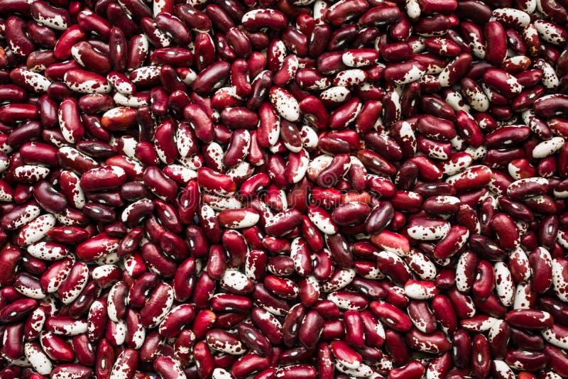 Prestations-maladie des haricots Rouge et fond de haricots blancs Benefi image stock