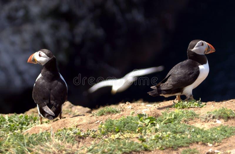 Preste atenção para fora para gaivotas! imagens de stock royalty free