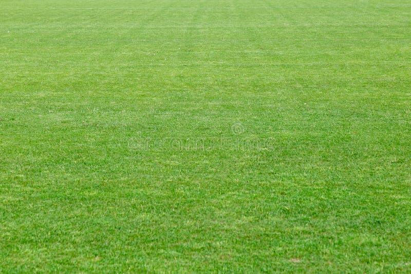 Presto prato inglese verde ben curato naturale del taglio da un'erba fresca Grande campo a lungo termine Colpo orizzontale fotografia stock
