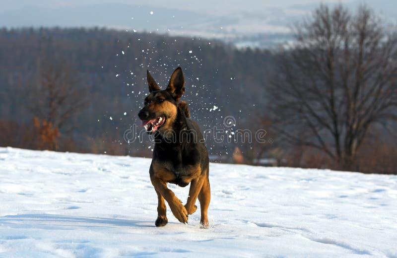 Pret in de sneeuw royalty-vrije stock foto