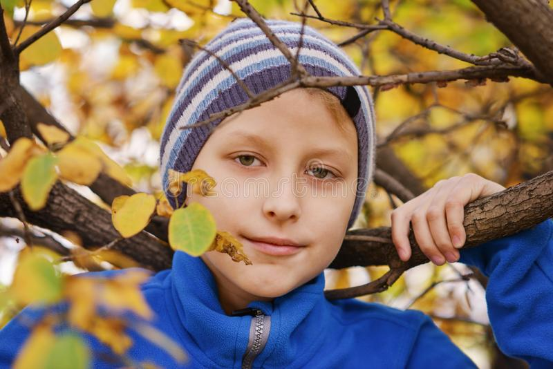 Preteen boy   in   autumn stock photo