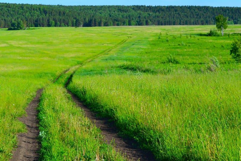 Preteenie meadows. Taiga meadows of Krasnoyarsk region. Rich in herbs and flowers royalty free stock photos