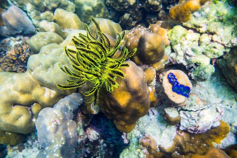 Preto amarelo do recife de corais no oceano imagens de stock