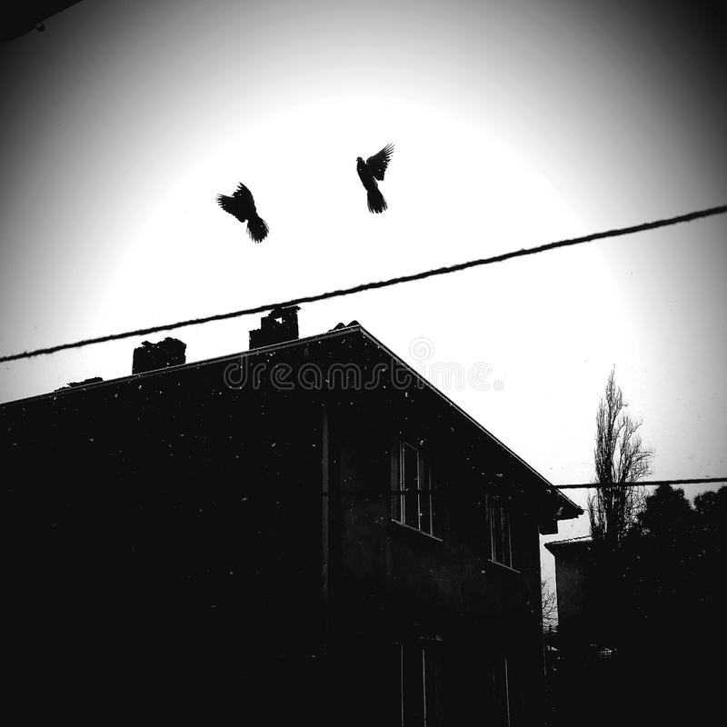 Preto da casa dos pássaros imagens de stock