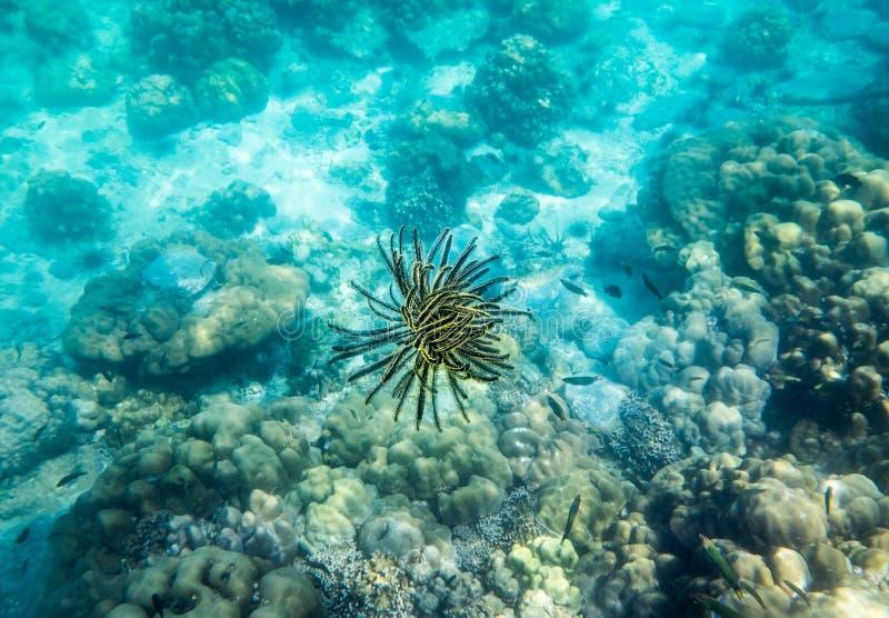 Preto do amarelo do recife de corais da anêmona subaquático imagem de stock royalty free