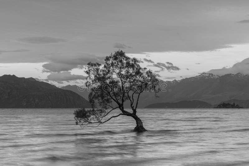 Preto e branco, a árvore só no lago de Wanaka Nova Zelândia imagem de stock
