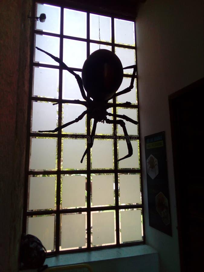 Preto gigante 1 da aranha foto de stock