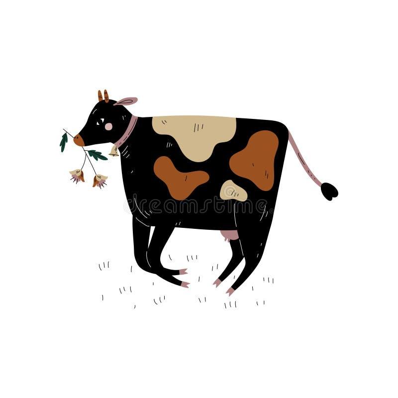 Pretos manchados acobardam a mastigação da grama, ilustração do vetor da criação de animais da produção animal de gado de leiteri ilustração royalty free