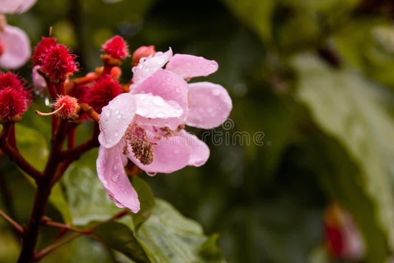 Prettige dalingen over de gevoelige bloem royalty-vrije stock fotografie