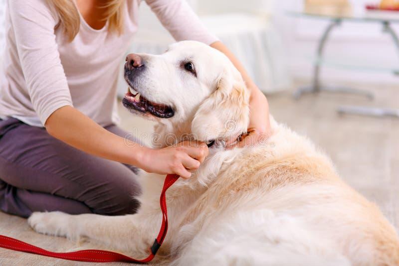 Prettige vrouw die pret met een hond hebben royalty-vrije stock foto's