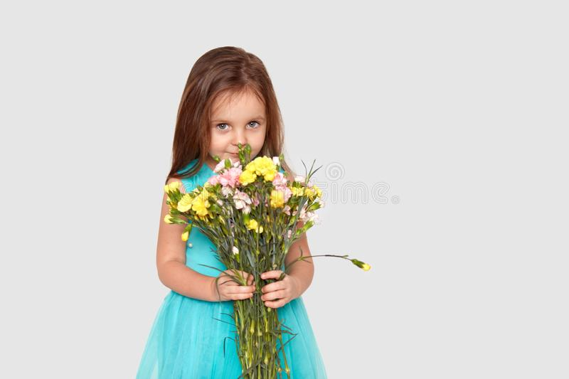 Pretty adorable small female child holds beautiful bouquet of flowers, smells pleasant odour, dressed in festive blue dress, has stock image