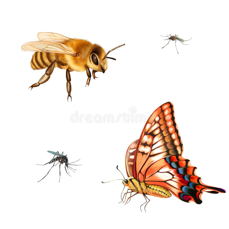 Pretty bee. Red and yellow butterfly, Old World stock illustration