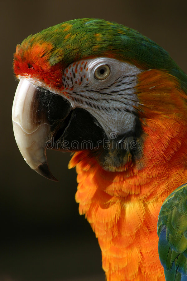 Pretty Bird royalty free stock image