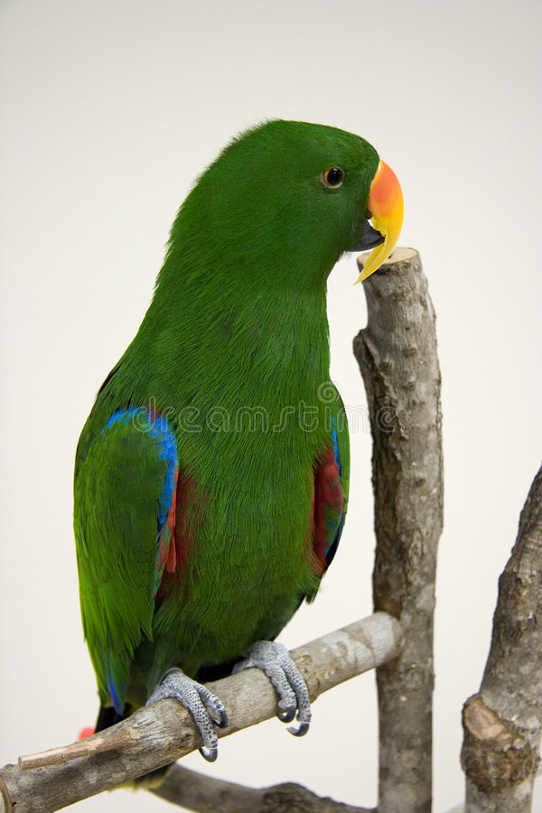 Pretty Bird! royalty free stock image
